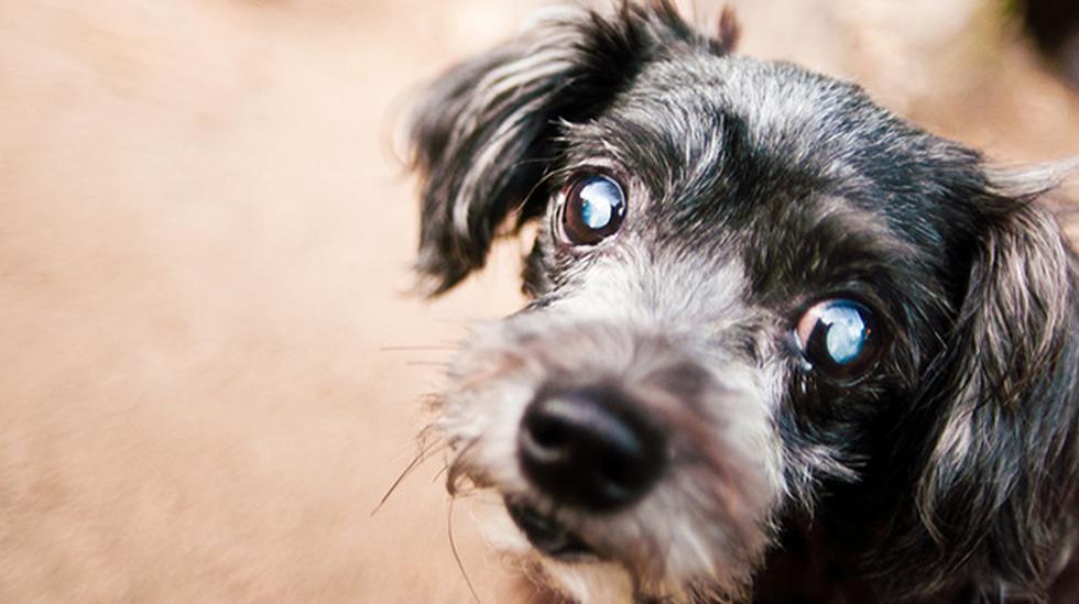 Ojo con las cataratas en tu mascota - 1