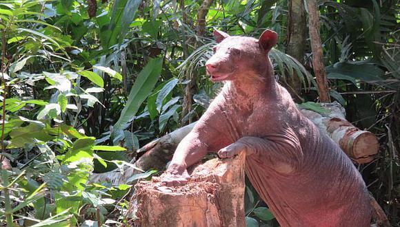 La osa Cholita encontró hogar en la reserva ecológica Taricaya