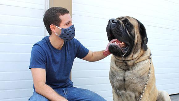 Además del alimento, WUF logró que cientos de perros se beneficien con medicinas de diferentes tipos. (Foto: Cortesía)
