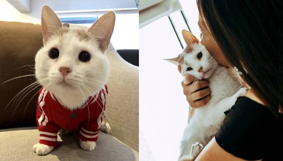 Panchini tiene tres años pero su tamaño es algo menor al de un gato de su edad. Pesa aproximadamente tres kilos.