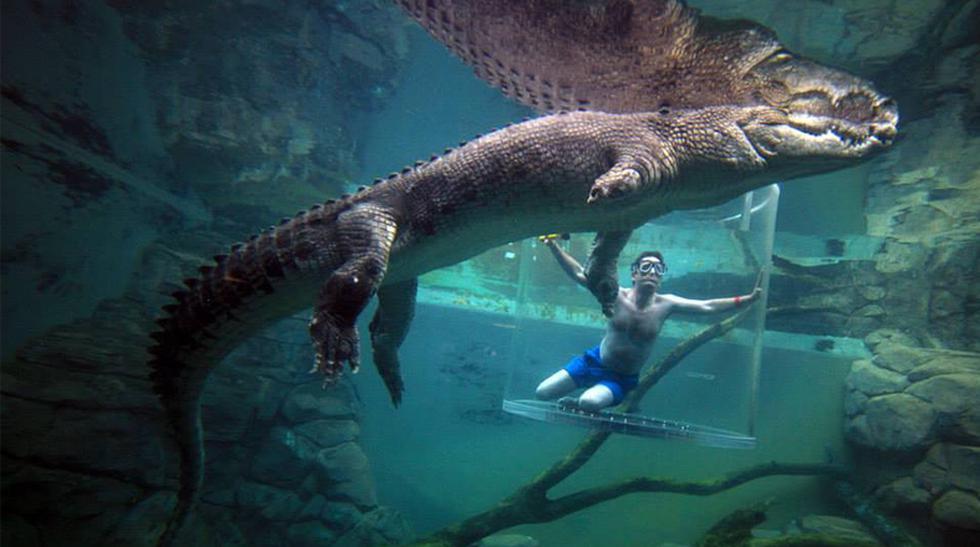 Seis formas curiosas de nadar con distintos animales - 1