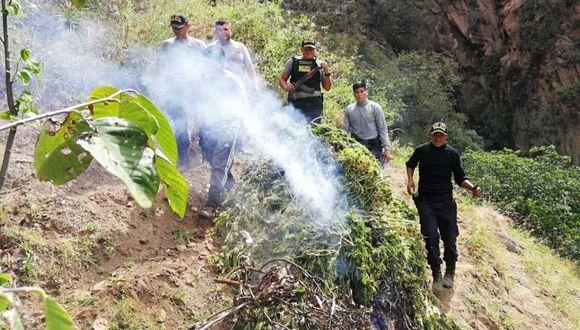 Los sembríos ilegales eran secados entre árboles frutales en un terreno de 400 metros cuadrados en el sector Wuabo. (Foto: Cortesía / Jacinto Rojas).