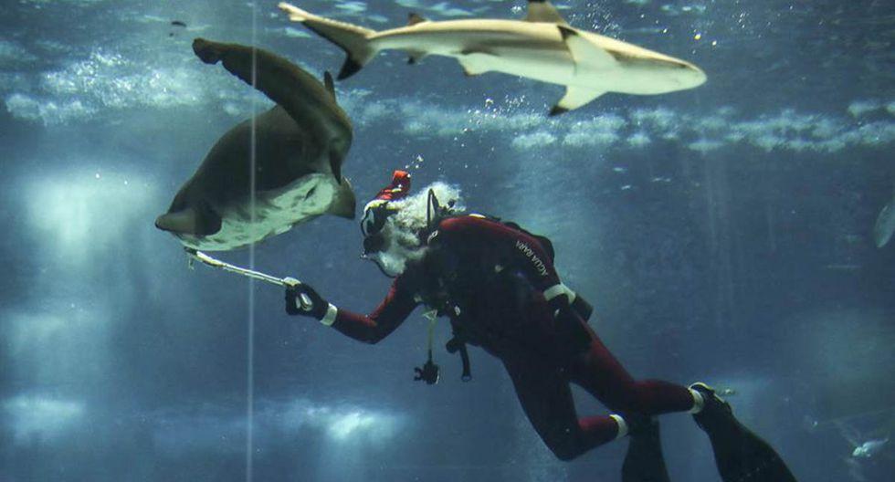 La historia del Papá Noel buzo que nada y alimenta a tiburones en un acuario de Brasil. | Foto: EFE
