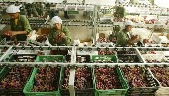 A fines de año se superaría los valores de exportación de US$ 1,000 millones en uvas frescas. (Foto: GEC)
