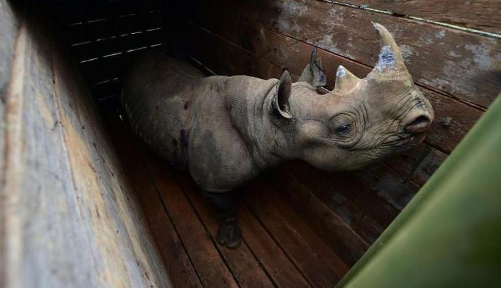 El profesor de patología veterinaria de la Universidad de Nairobi, Peter Gathumbi, afirmó que los animales estaban deshidratados e inquietos. (Foto: Reuters / Referencial)