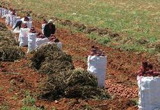 Empleo formal en el sector agro con buen ritmo en el 2020, ¿qué impacto tendrá la nueva legislación?