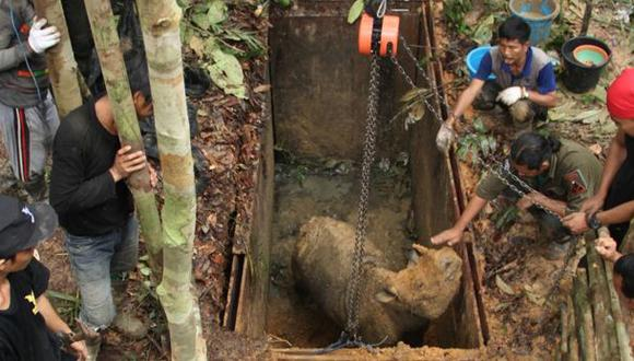 Primer contacto con un rinoceronte raro en Borneo tras 40 años