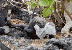 Galápagos: 36 especies están en riesgo por contaminación con plásticos