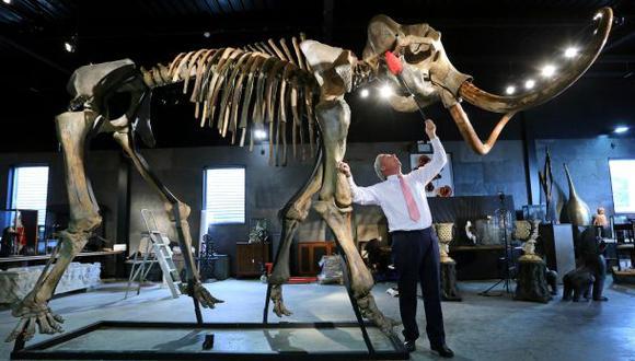 Científico estadounidense quiere revivir a los mamuts