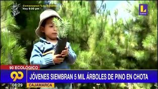 Cajamarca: Jóvenes siembran 5 mil árboles de pino