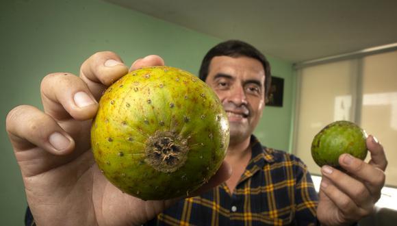 En Lima el principal propulsor de esta fruta olvidada durante cientos de años es el naturista Dieter Linares. (Foto: Luis Miranda)