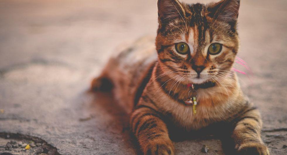 El protagonista es el pequeño Sunny, un gato que pasó la mitad de su vida en un refugio (Foto: Pixabay/ Referencial)
