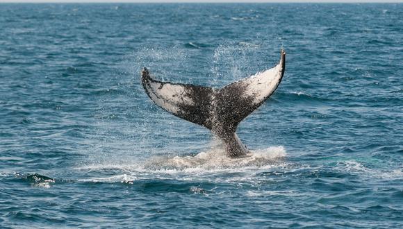 Una ballena sorprende a un grupo de surfistas en las costas de California. ( Foto: Pixabay / referencial )