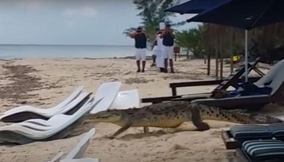 VIDEO VIRAL | Cocodrilo atraviesa playa ante la atónita mirada de los turistas. (Foto: captura YouTube)