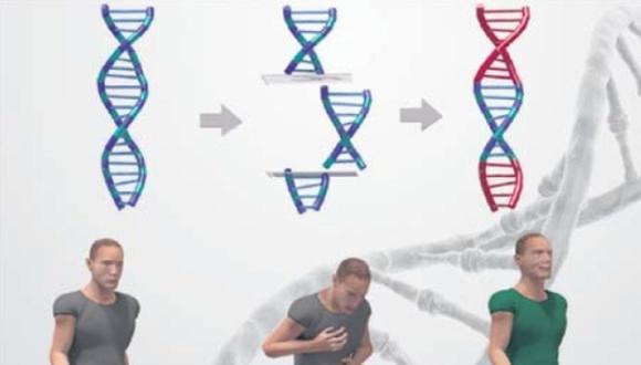 Durante muchos años se ha mantenido la controversia con respecto a la experimentación con embriones humanos. Un reciente estudio aviva esta discusión. (El Comercio)
