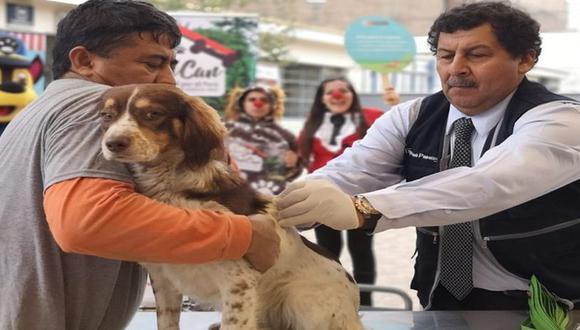 Una vez al año, el Ministerio de Salud (Minsa) realiza la campaña Van Can, para la cual cuenta con personal de salud debidamente identificado para aplicar las dosis de vacunas contra la rabia a las mascotas. (Difusión)