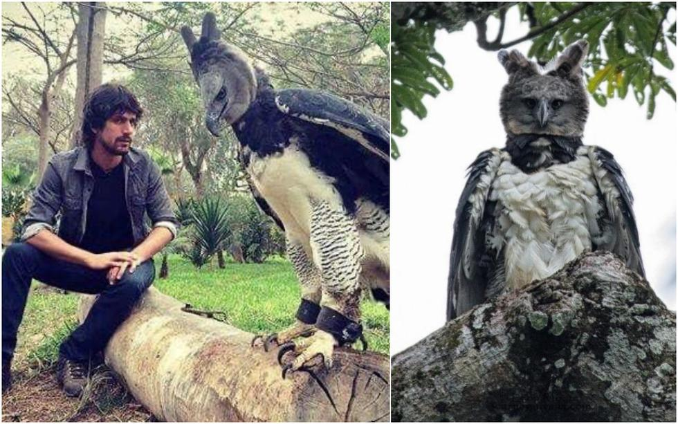 FOTO 1 DE 3 | Debido a su gran tamaño, las personas suelen creer que se trata de alguien disfrazado de ave. | Foto: @divinenocturnal y @nonsuch_girl / Twitter (Desliza a la izquierda para ver más fotos)