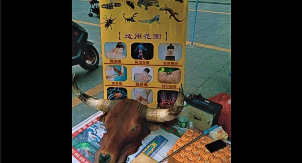 Perros y gatos son vendidos en mercados de China. (Foto: Captura Daily Mail)