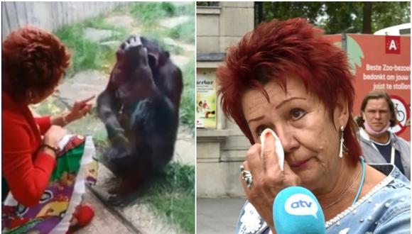 """Zoológico de Bélgica prohíbe el acceso a mujer acusándola de tener """"romance"""" con un chimpancé. (Foto: Captura de pantala / ATV)"""