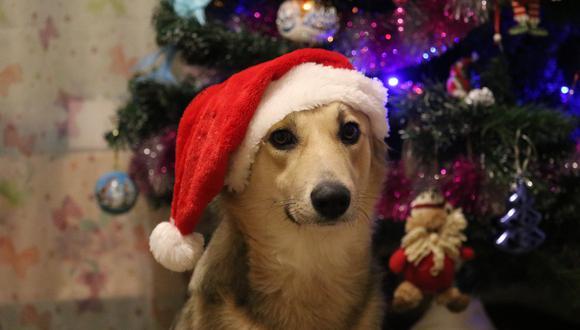 Perro guía ayuda a su dueña con los preparativos para Navidad. (Foto: Pixabay / referencial)