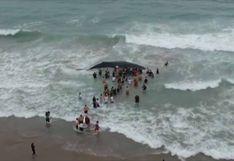 Voluntarios ecuatorianos liberaron a una ballena que estuvo varada 11 horas [VIDEO]