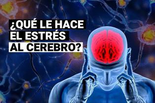 ¿Qué le hace el estrés al cerebro? ¿Se deja de pensar correctamente?