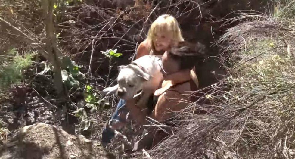 Se hizo viral en Facebook el rescate de un can que había convertido unos arbustos en su hogar. (Foto: Captura)