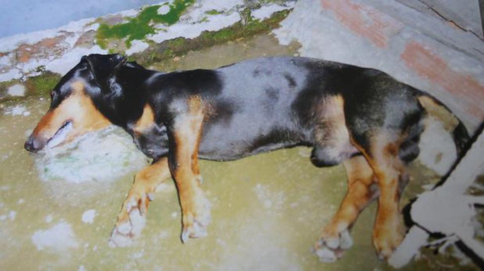 Huancayo: acusan a ex alcalde de envenenar a 3 gatos y 2 perros - 1