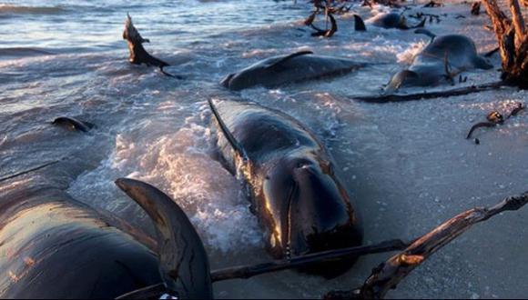 Más de 50 ballenas piloto encalladas han muerto desde el martes