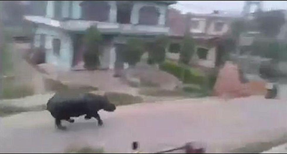 Rinoceronte persigue a motociclistas en plena calle [VIDEO]