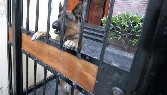 Nuevos casos de maltrato animal exigen penas para asesinos