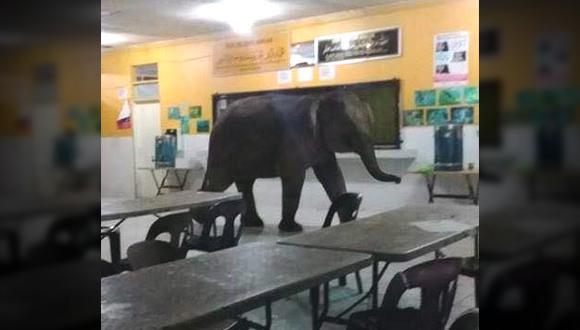 Este elefante entró en una escuela en Malasia y el incidente se hizo viral en Facebook. Estos animales se movilizan por las ciudades debido a la depredación de su hábitat.