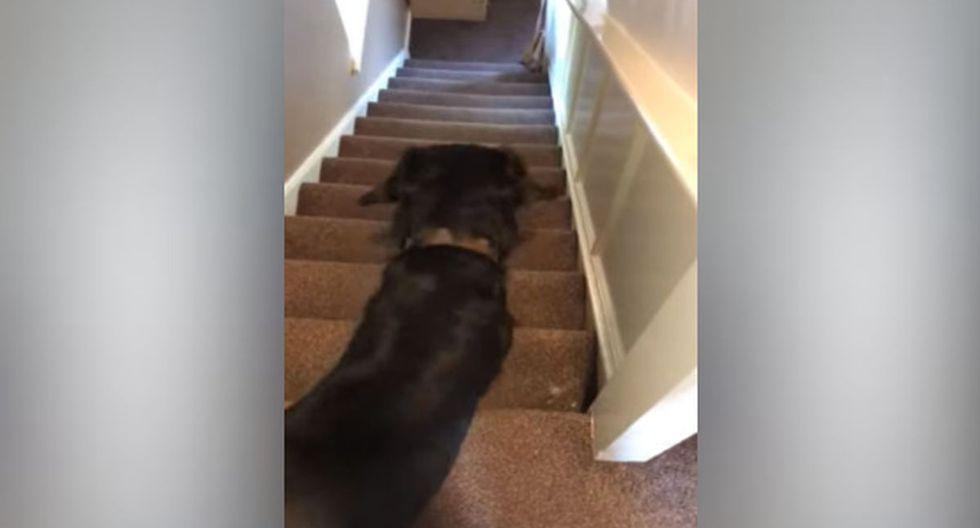 Luego de que su dueño le habló, el animal decidió levantarse. (YouTube: ViralHog)