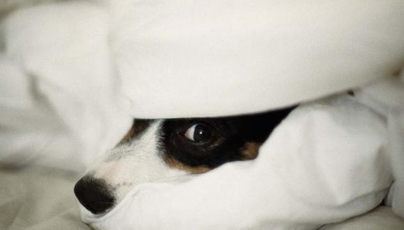 Tu compañía y mimos son lo más importante para que tu perro o gato se sienta seguro. (Foto referencial)