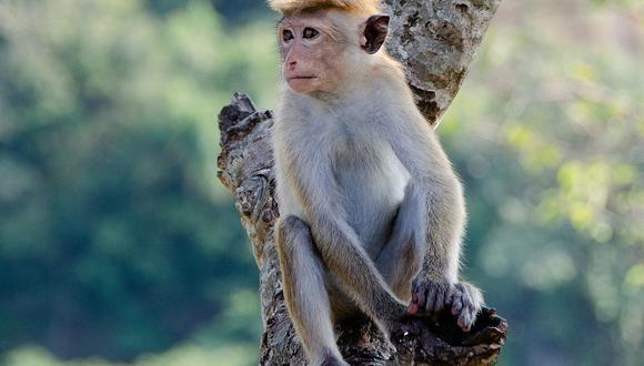YouTube viral: venenosa pitón estrangula a un mono ante la mira de la manada. (Foto: Pen Ash / Pixabay)