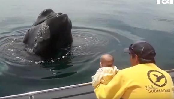 Bebé de seis meses juega con un amigable ballena en medio del mar. (Foto: Captura YouTube)