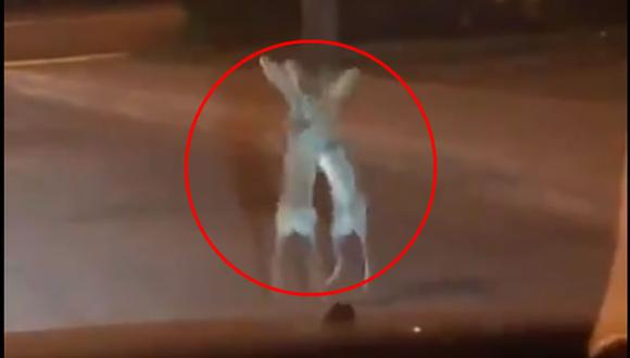 Video viral capta a liebres peleando en medio de la noche. (cortesía Twitter)