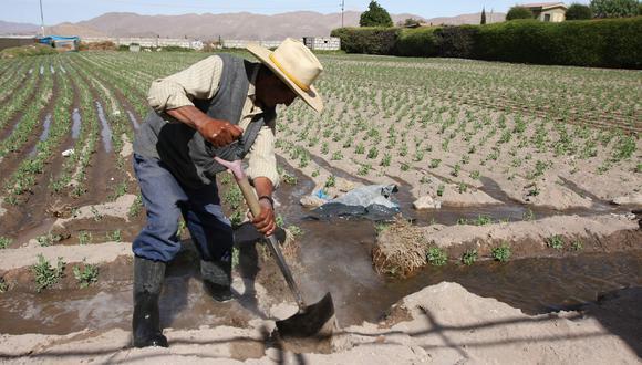 """Los cultivos se verían afectados debido a la incapacidad de pagar más mano de obra por el abrupto incremento en el sobrecosto"""", señalaron desde AGAP. (Foto: GEC)"""