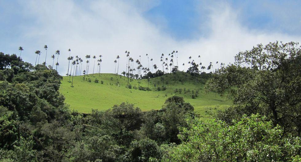 Este valle colombiano tiene las palmeras más altas del planeta - 2