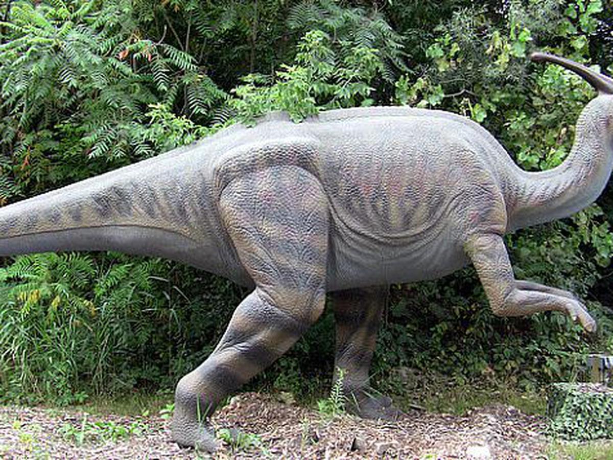Algunos Dinosaurios Herbivoros No Eran Tan Vegetarianos Como Se Pensaba Tecnologia El Comercio Peru Compartir esta noticia fbfacebook twtweet. eran tan vegetarianos como se pensaba