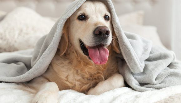 Los perros no siempre estornudan por complicaciones de salud o porque haga mucho frío. (Foto: Bao_5 / Pixabay)