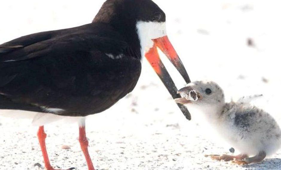 """Esta imagen es """"desgarradora"""", dicen los ambientalistas. (Foto: Karen Mason)"""