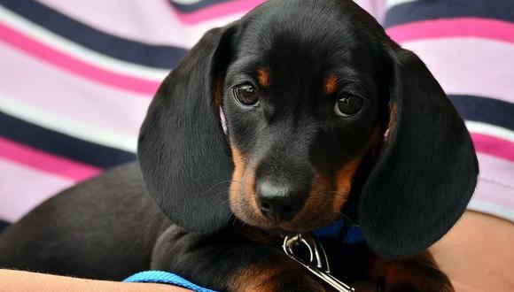 El can le quitó la tristeza a la bebé cuando apareció frente a sus ojos. El clip causa sensación en YouTube. (Pixabay)