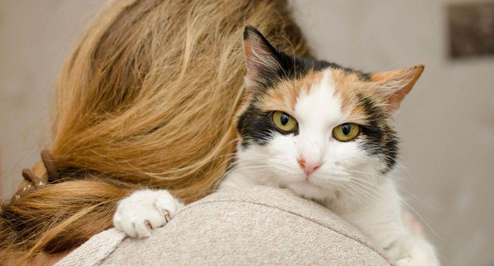 El gato dejó boquiabiertos a propios y a extraños a la hora de 'pedir ayuda' a su dueña para limpiarse la cara. (Pixabay)