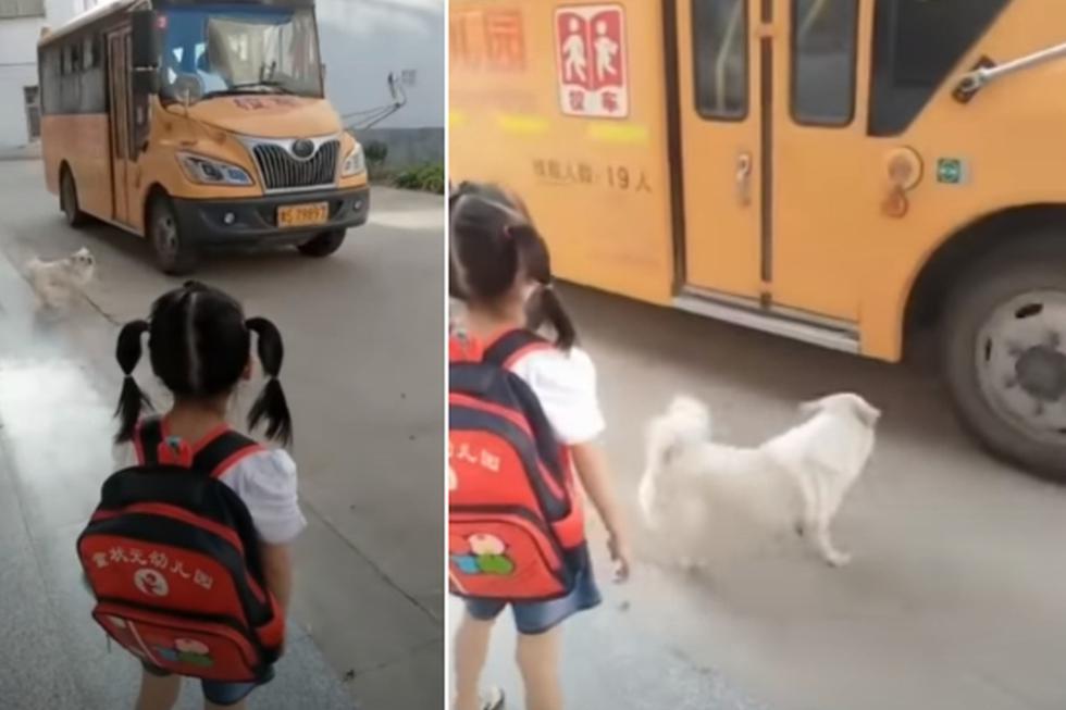 El perro es el fiel compañero de una niña. Su accionar ha sorprendido bastante en redes sociales. (YouTube: People's Daily, China 人民日报)