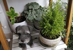 Conversar, regar, podar: ¿cómo cuidar 30 plantas en casa durante la cuarentena?