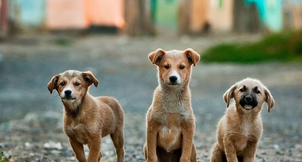El refugio tenía a su cargo casi 200 animales. (Foto: Referencial/ Pixabay)