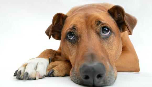 Un comportamiento anómalo pueden advertirnos de que nuestra mascota está enferma. (Pixabay)