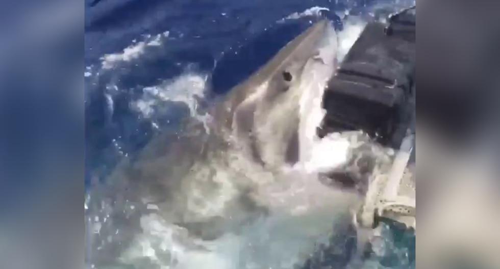 Un video que muestra el feroz ataque de un tiburón blanco a un grupo de buzos se volvió viral en Facebook y otras redes sociales. (Foto: Islander Charters, Inc. en Facebook)