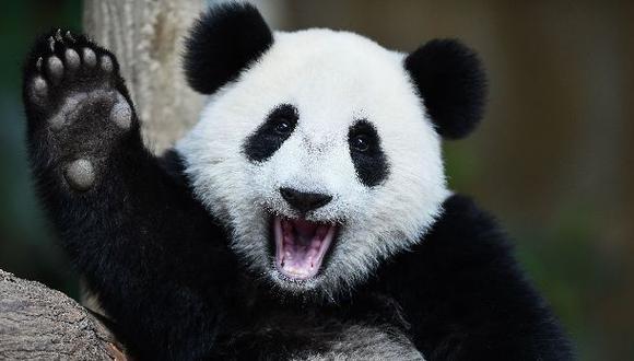 Realojarán a 172.200 personas para crear un parque para pandas